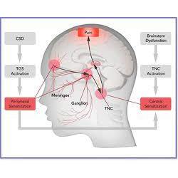 Pain & Nerve Irritation